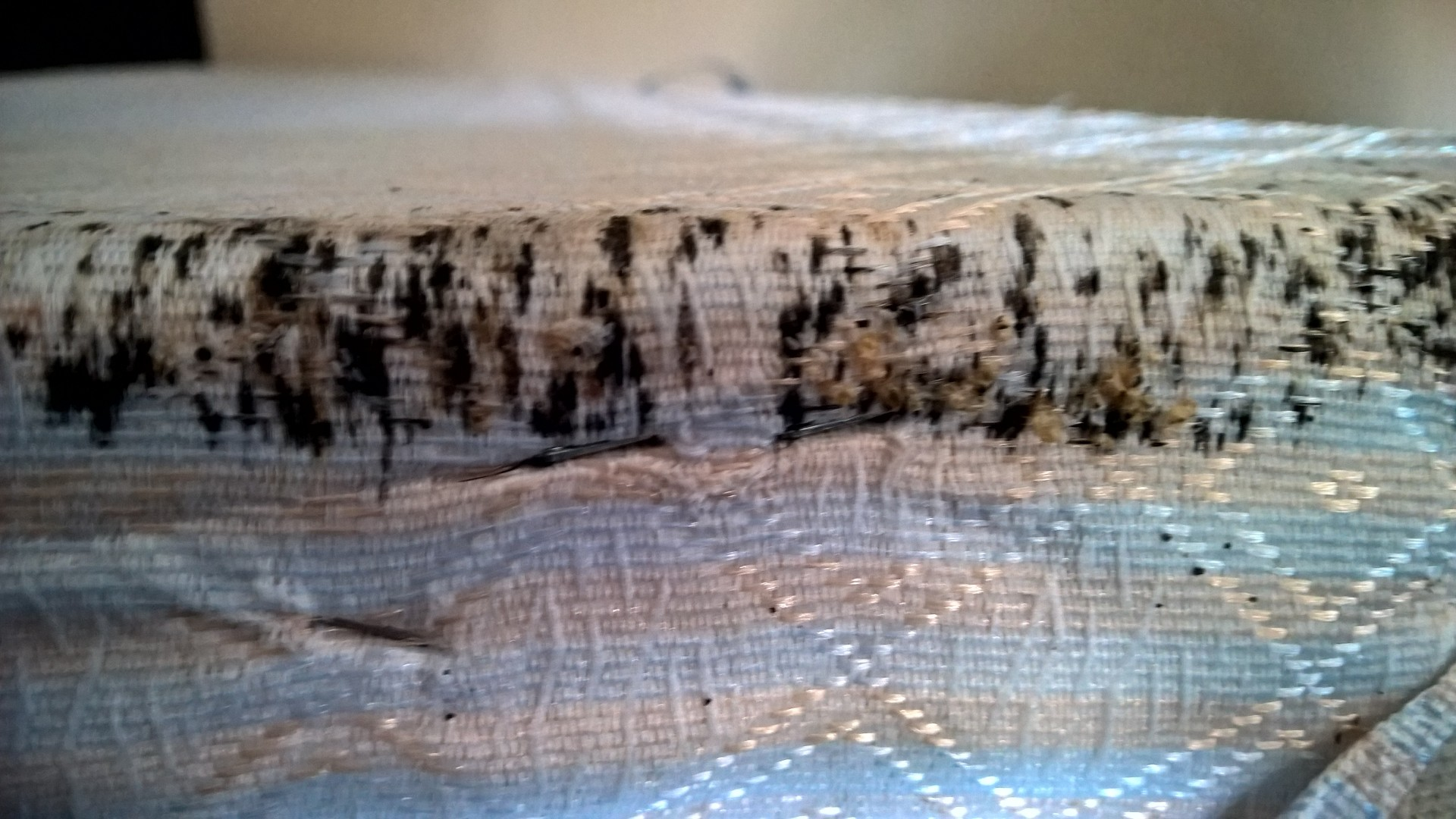 Getting rid of Bed Bugs Who is responsible